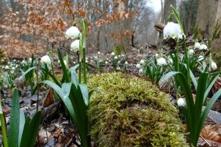 Śnieżyca kwietnie w rezerwacie Fot Łukasz Kujawa https://www.facebook.com/profile.php?id=100001598119464